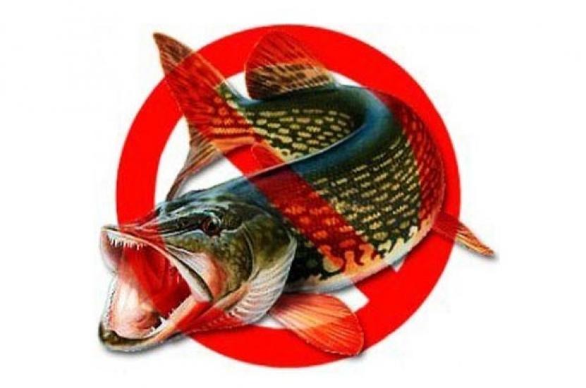 запрет на рыбную ловлю в челябинской обл