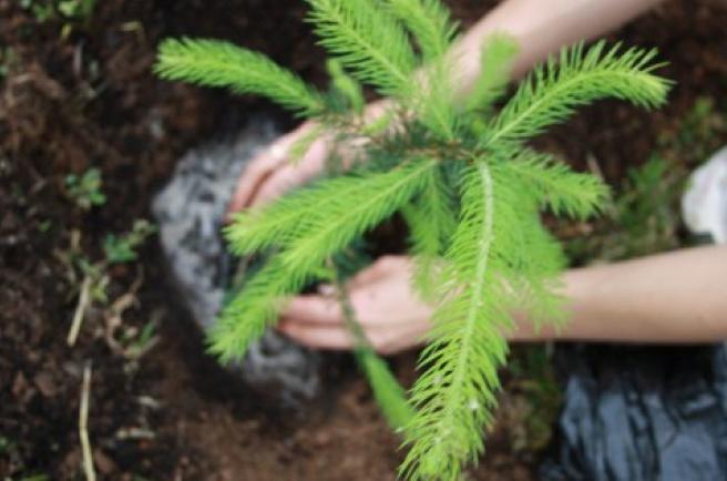 К чему снится елки сажать 96
